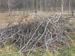 Brush pile on the edge of the woods