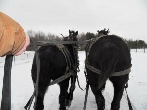 Snowy Sled Ride