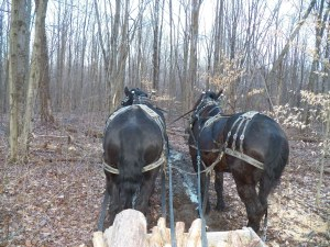 Hoss and Knight waiting on me