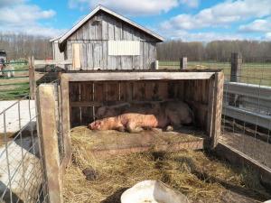 Noah taking a nap