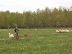 Me and the herding calves