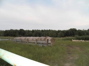 2013 hay crop