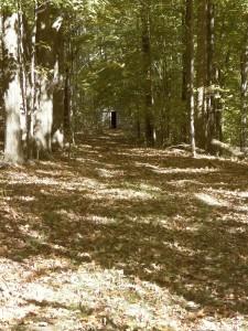 A Woodland Walkway