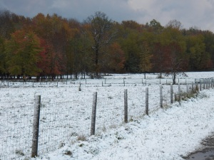 Snow adds to the beauty of Autumn