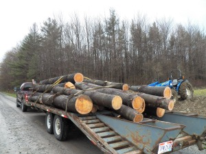 Hauling a load of saw logs for a friend