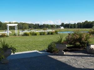 The backyard in bloom