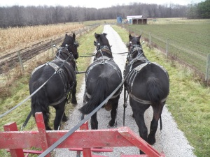 Plenty of horse power