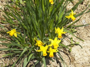 Transplanted Blooms