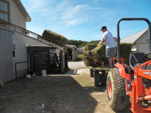 Even Cinch can't believe that Jake can work on hay in short pants!