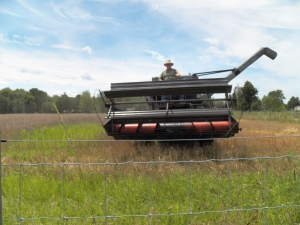 The 2015 Spelt Harvest is finished