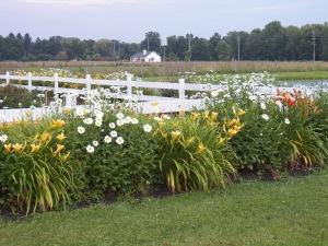 our garden border in full bloom