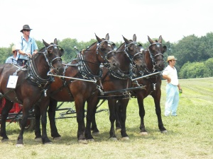 4-horse hitch on a powercart and round baler