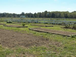 Garden beds ready for winter