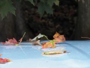 Autumn is closing in...