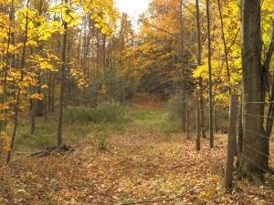 An Autumn sap road