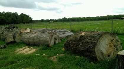 trunkwood
