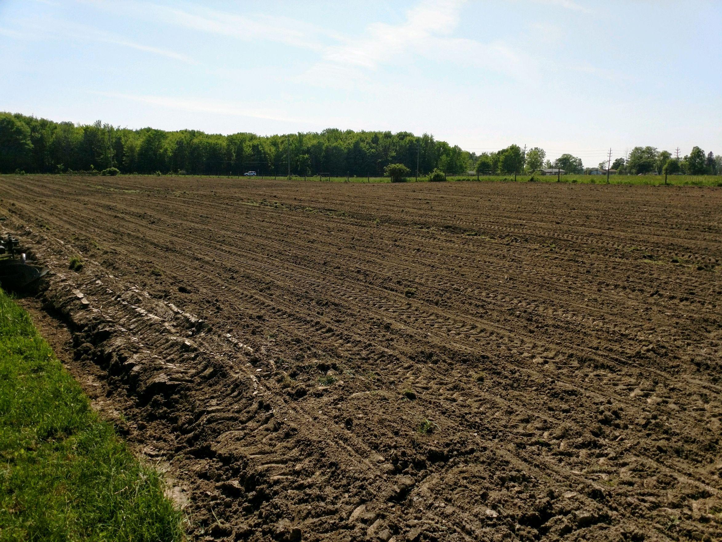 cornplanting12019