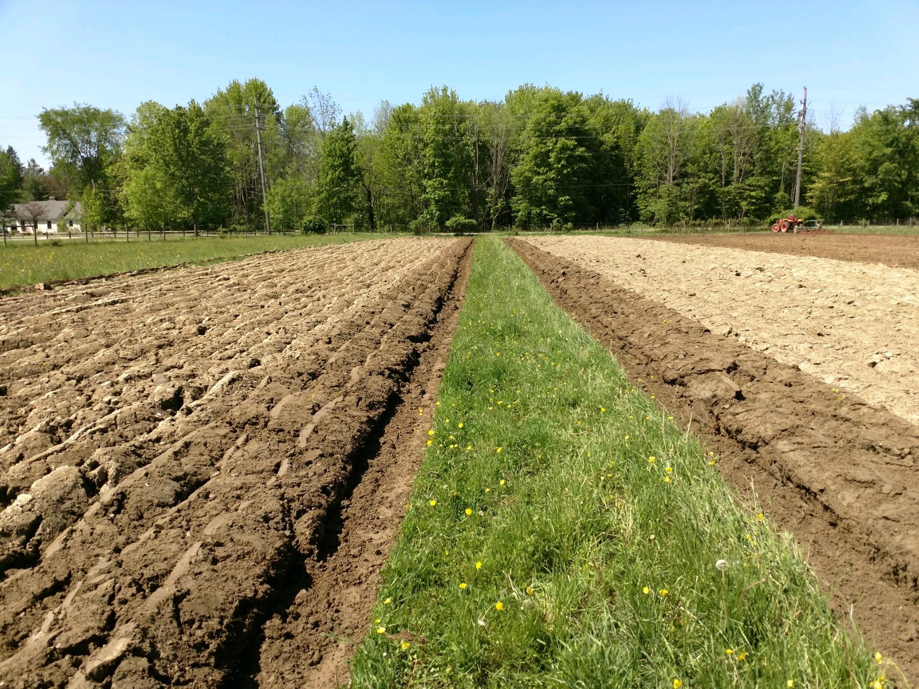 cornplanting22019