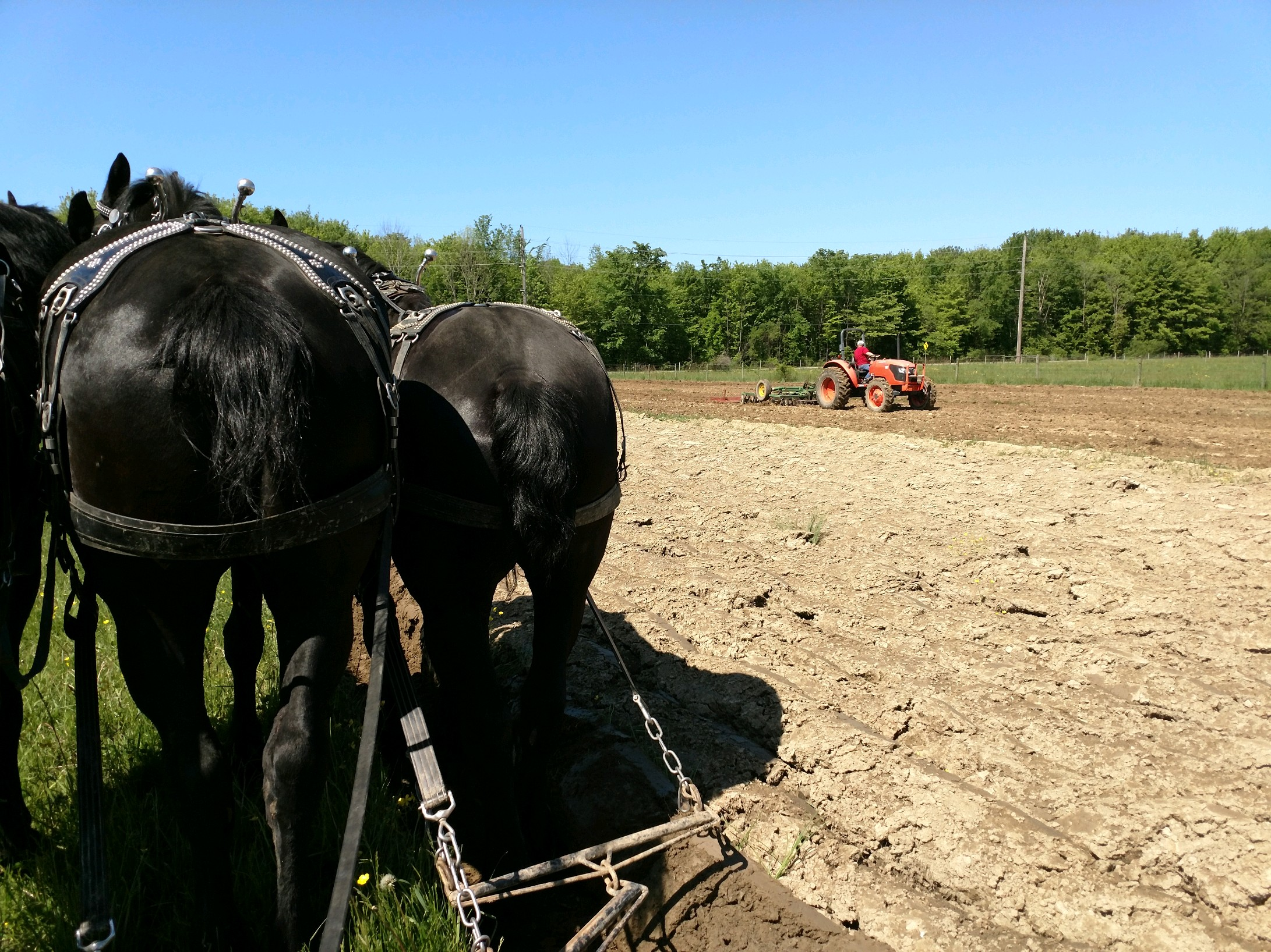 cornplanting42019