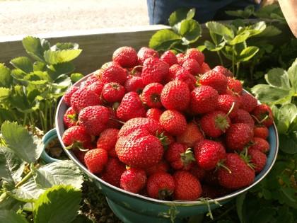 strawberry2019