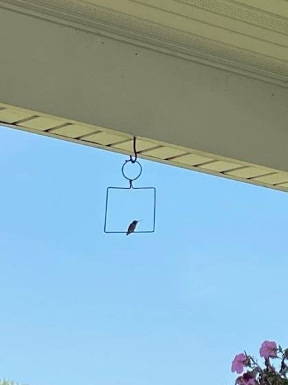 hummingbirdswing