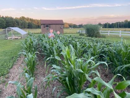 KK&corn2020
