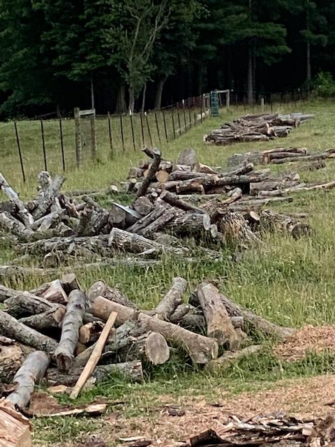 woodsplit20203